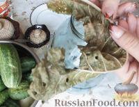 Фото приготовления рецепта: Консервированные огурчики на зиму - шаг №4