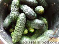 Фото приготовления рецепта: Быстрые маринованные огурцы на зиму - шаг №1