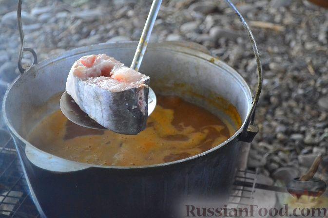 Фото приготовления рецепта: Халасле - венгерский рыбный суп - шаг №10