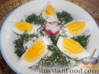 Фото к рецепту: Салат из редиса с огурцами и со сметаной