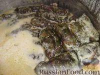 Фото к рецепту: Долма в листьях свёклы
