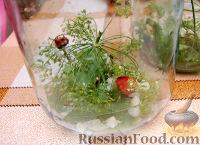 Фото приготовления рецепта: Рецепт консервации огурцов - шаг №1