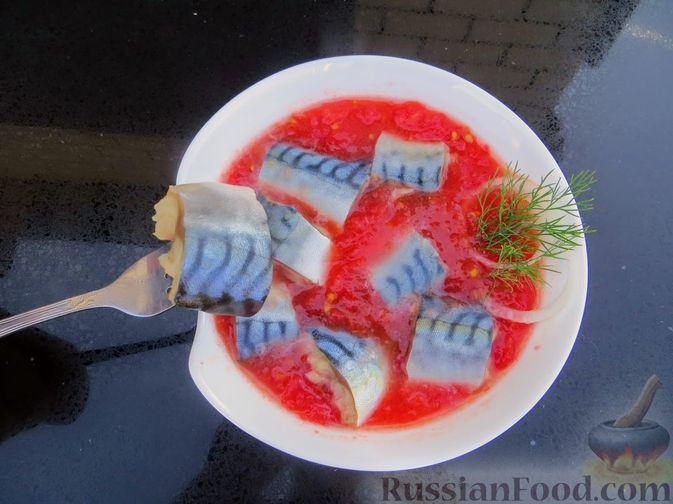 Фото к рецепту: Закуска из скумбрии в томатном маринаде с луком и чесноком