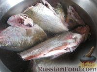 Фото приготовления рецепта: Уха из карася - шаг №2