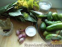 Фото приготовления рецепта: Засолка огурцов в банках - шаг №1