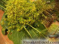 Фото приготовления рецепта: Засолка огурцов в банках - шаг №4