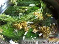Фото к рецепту: Малосольные огурцы