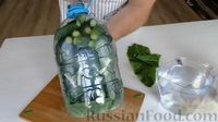 Фото приготовления рецепта: Огурцы в бутылке (быстрый способ засолки огурцов на зиму) - шаг №5