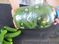 Фото приготовления рецепта: Огурцы в бутылке (быстрый способ засолки огурцов на зиму) - шаг №8