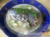 Фото к рецепту: Экономная уха из головы семги